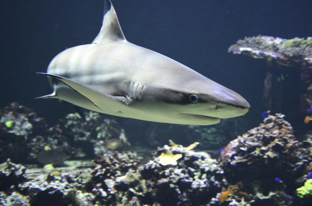Haide kaitseks on kogutud 14 200 allkirja