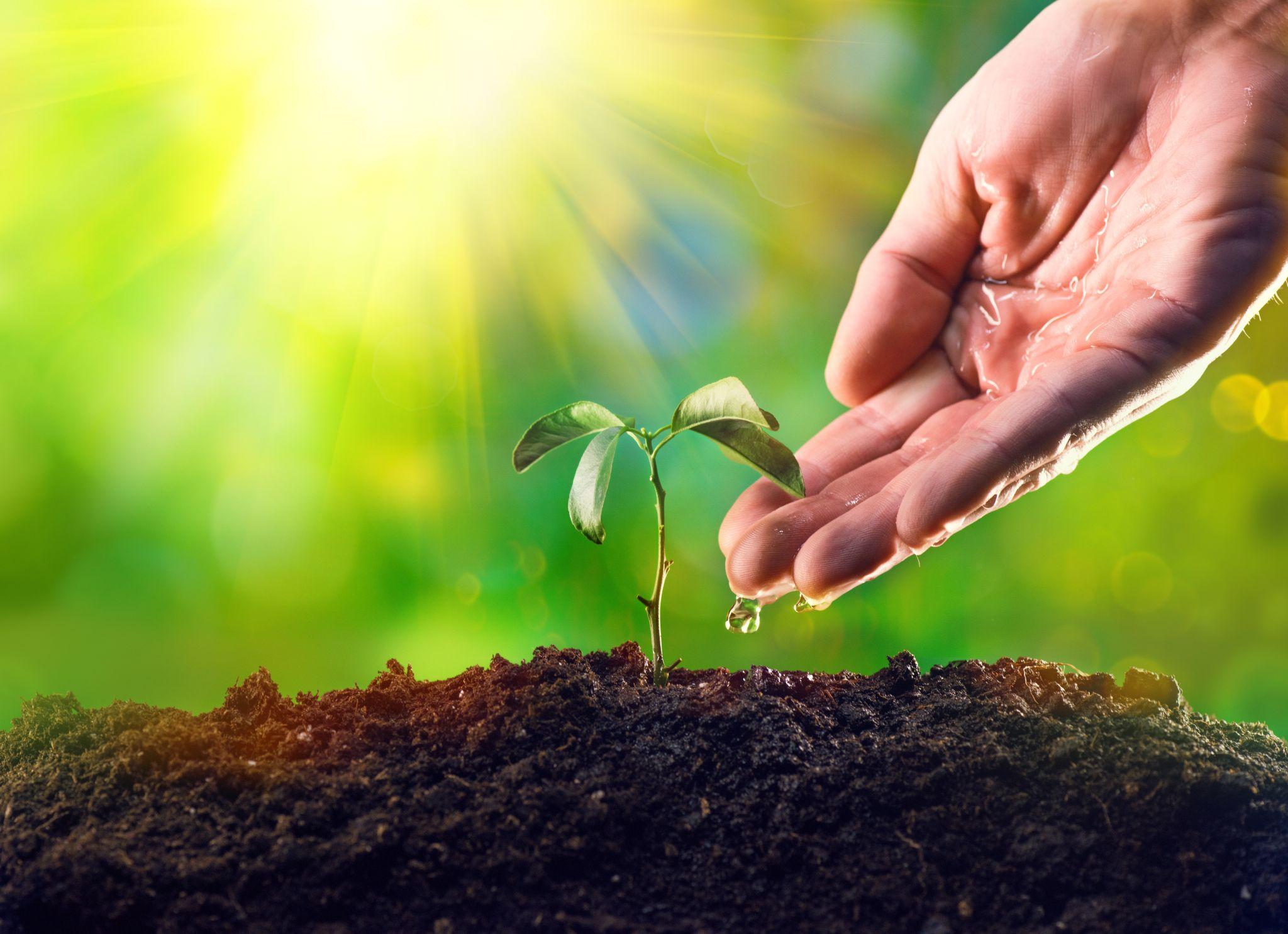 RMK kasutab tänavu metsade uuendamisel uudseid lahendusi