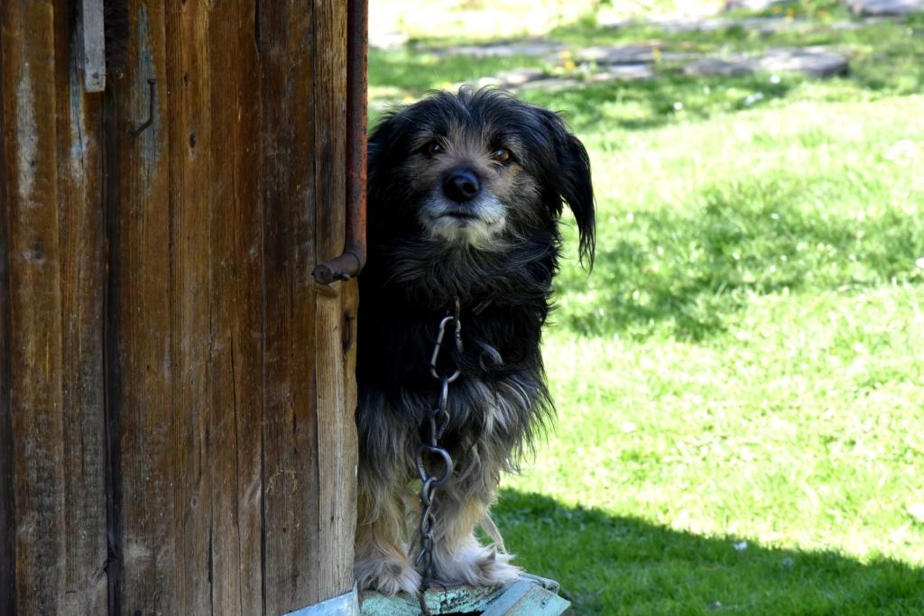 Kodutud koerad aitavad kaasa südamekuule