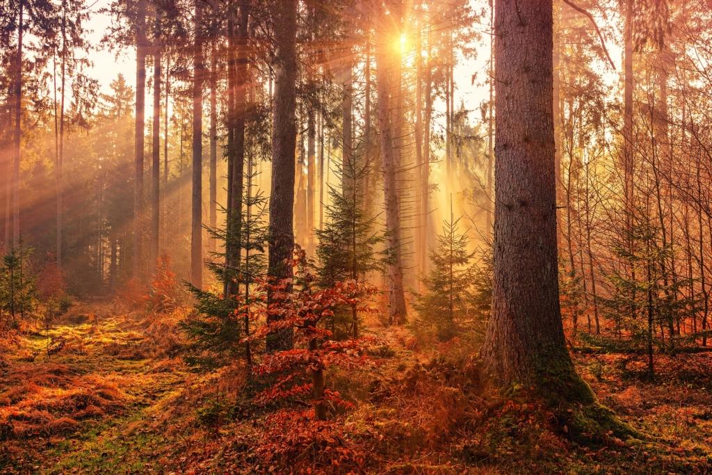 VIDEO! Eesti metsade tuleohtlikkuse tõttu tuleb looduses liikudes olla ettevaatlik