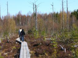 Pääsküla raba laudtee_foto_Jukko Nooni