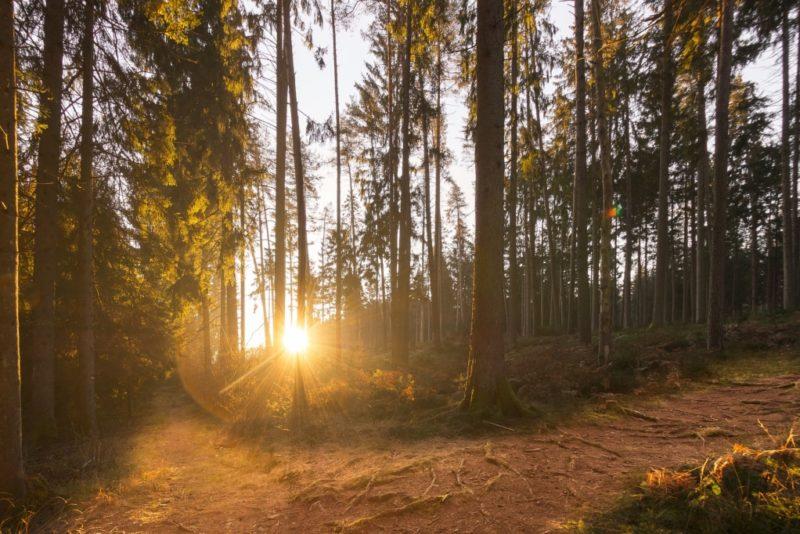 RMK kutsub inimesi metsaistutuspäevadele