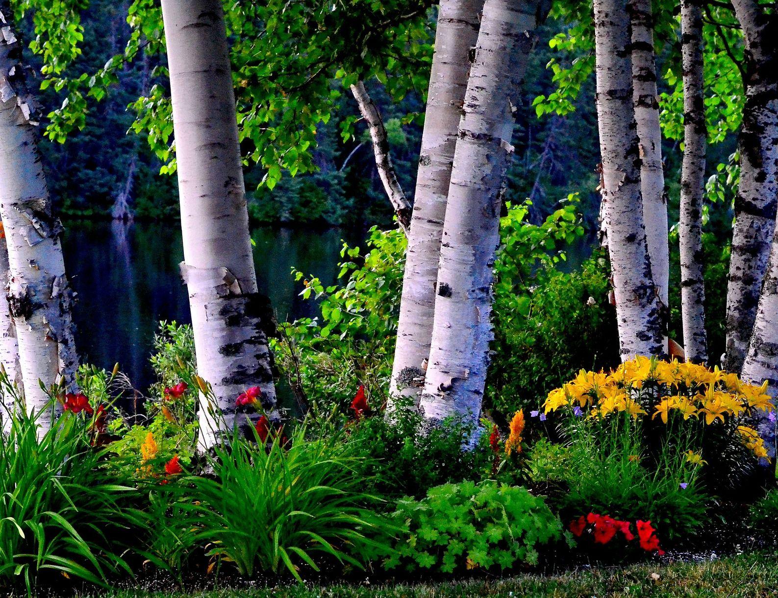 VIDEO! Viljandimaal istutati maha 100 väärtusliku puiduga puud