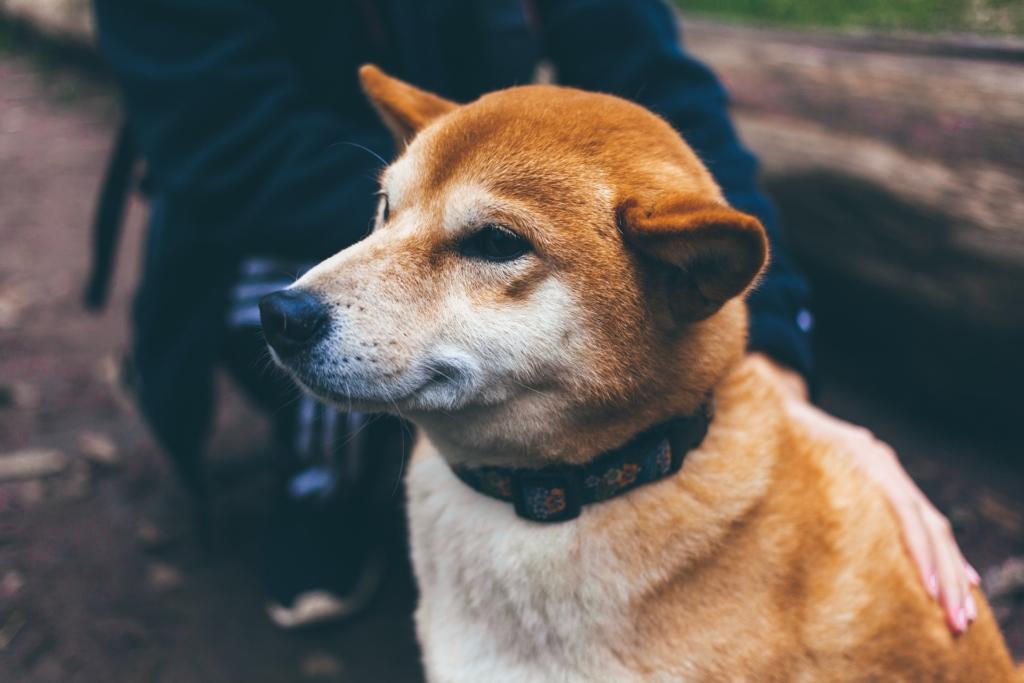 Toimub Euroopa väikeloomaarstide aastakongress