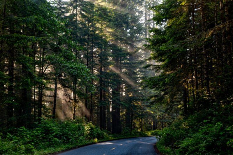 Eesti kuues rahvuspark luuakse Ida-Virumaale