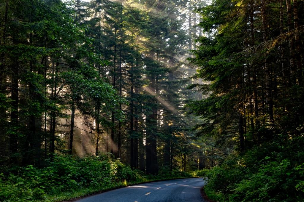 RMK ja EMÜ pikendasid puude parendamise programmi!