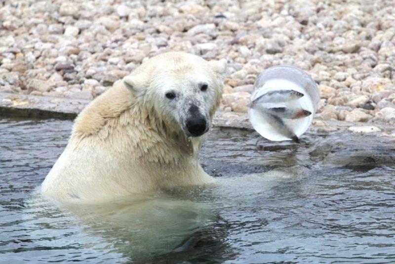 Pühapäeval toimub Tallinna Loomaaias jäätisepäev