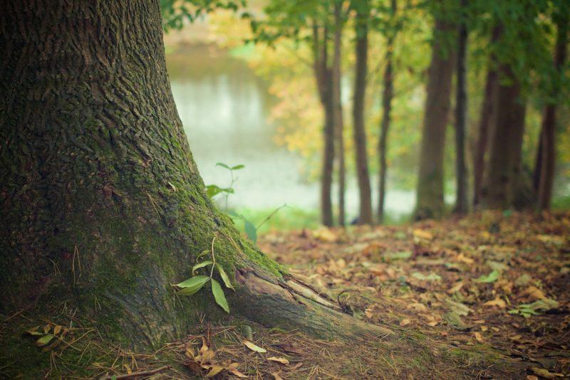LIIGU LOODUSES I RMK uue rakenduse abil muutub looduses liikumine lihtsamaks