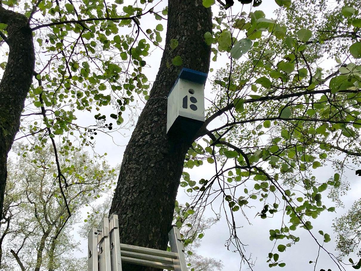 Armas tegu! Põhja-Tallinna parkidesse paigaldatakse 100 uut lindude pesakasti