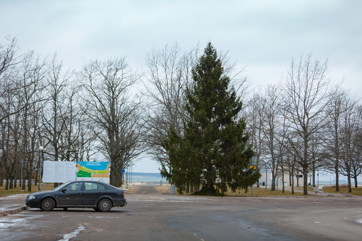 Põhja-Tallinnasse jõudis jõulukuusk