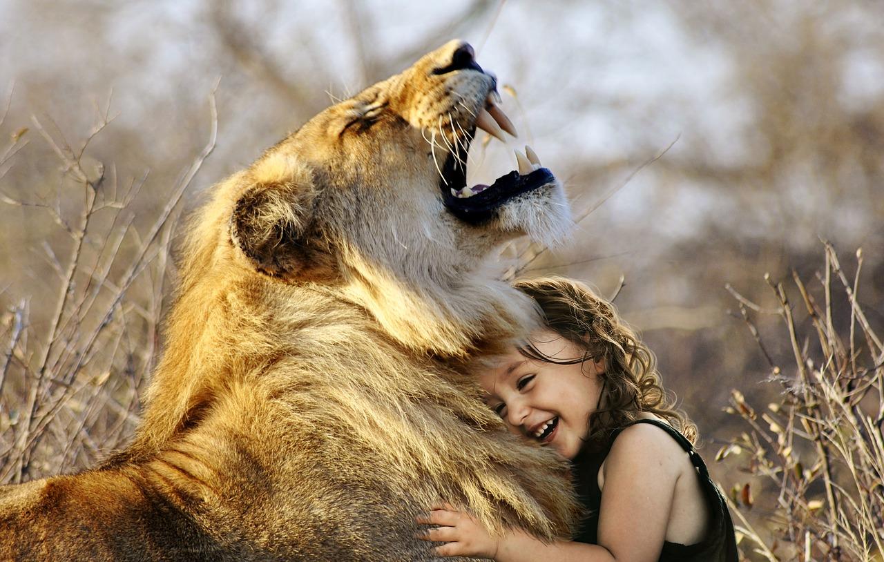 lõvi.Pixabay