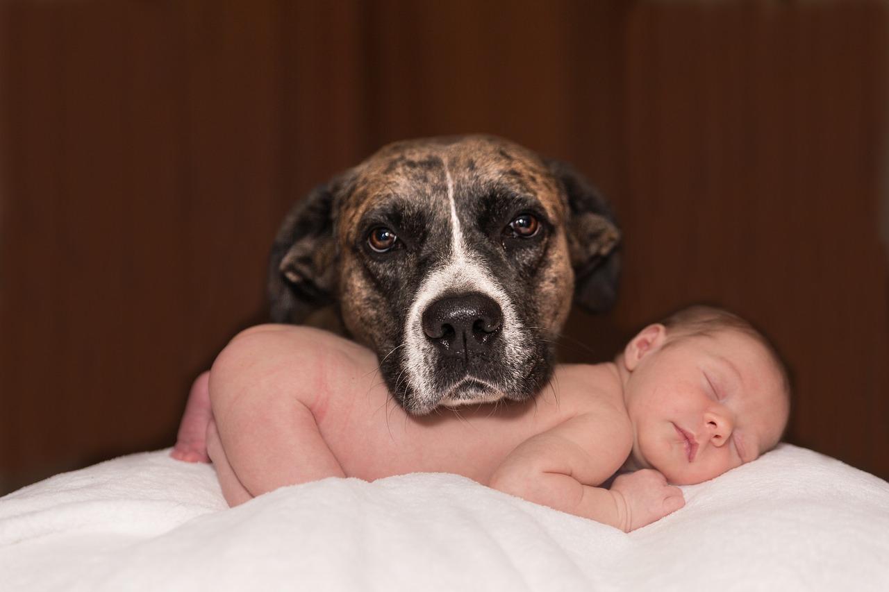 koer ja laps.Pixabay