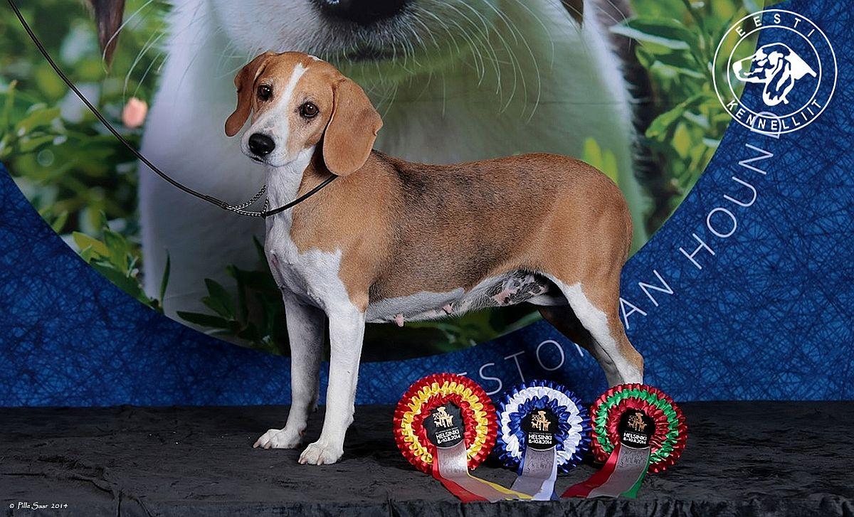 Kennelliit korraldab Saku suurhallis suure koertenäituse