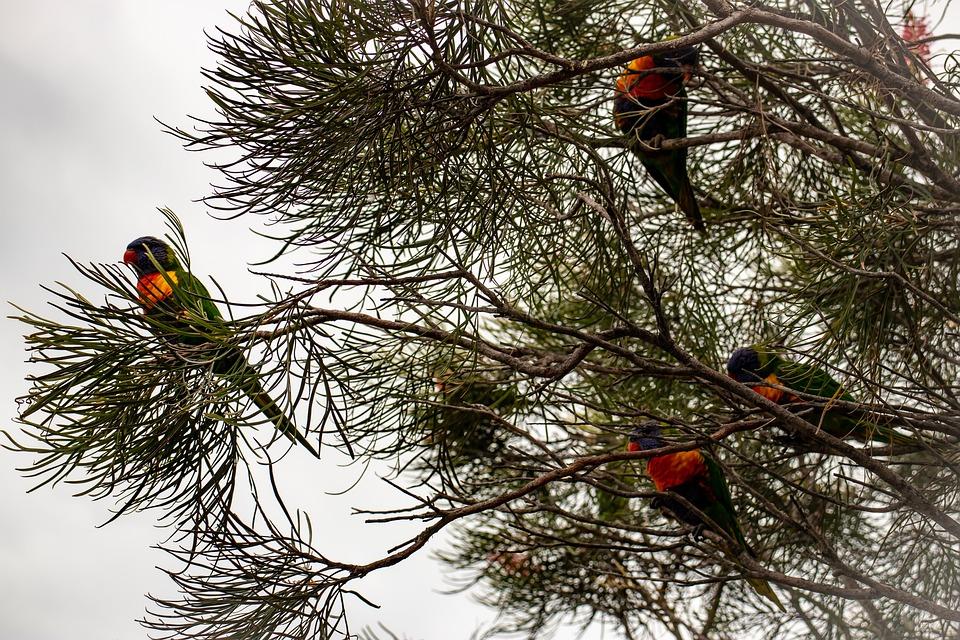 linnud-pixabay