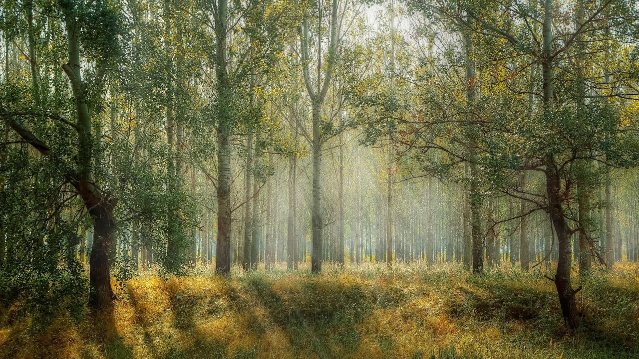 Eesti Ökokogukondade Ühendus liitus Looduse Õiguste Alliansiga