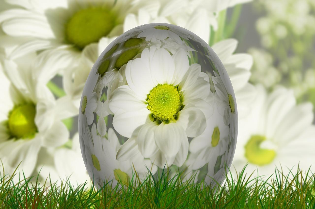 Ole teadlik! Loomakaitseorganisatsioon Nähtamatud Loomad kutsub tarbijaid tähistama munadepühi puurivabalt