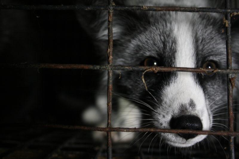 Varjupaikade MTÜ lihtsustab abi kutsumist hulkuva looma leidmisel