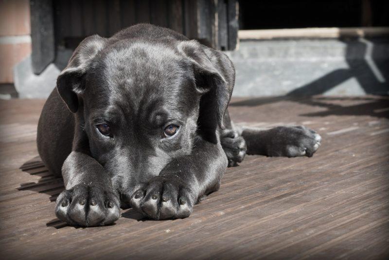 TA OOTAB SIND! Loomade varjupaigad üle Eesti peavad novembris esmakordselt vanemate koerte kuud
