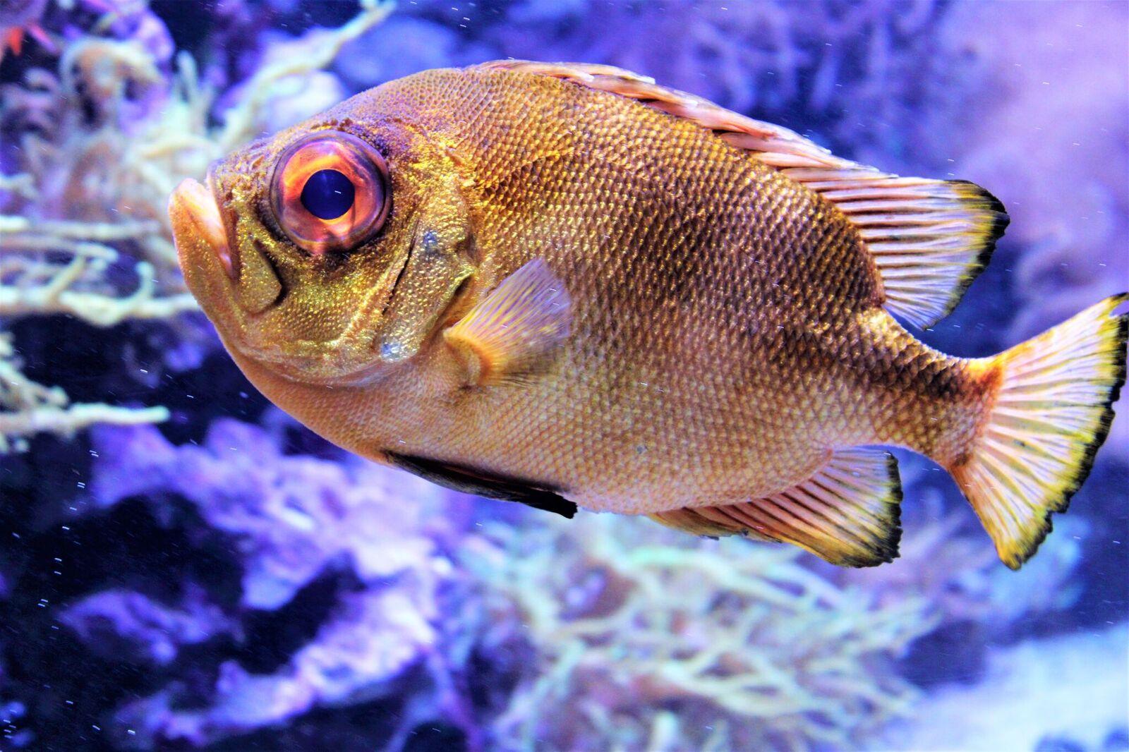 Loomade eestkoste organisatsioon avas kalaportaali