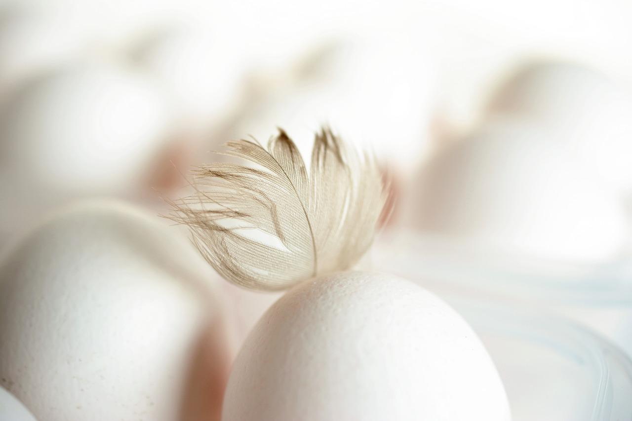 KUIDAS LUGEDA MUNAKOODI? 5 põhjust, miks jätta puurikanade munad ostmata