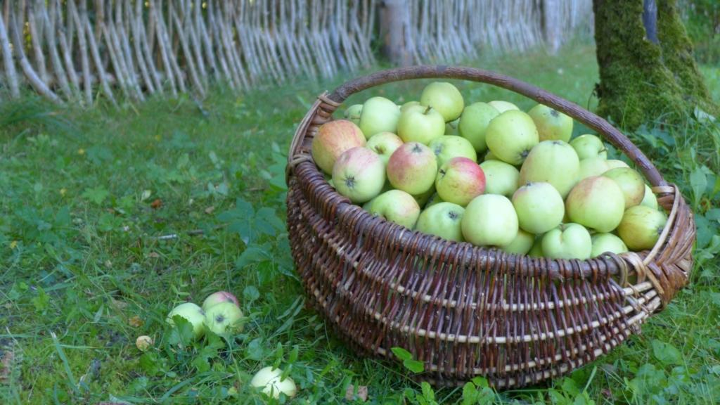 Õunaajaloo päev