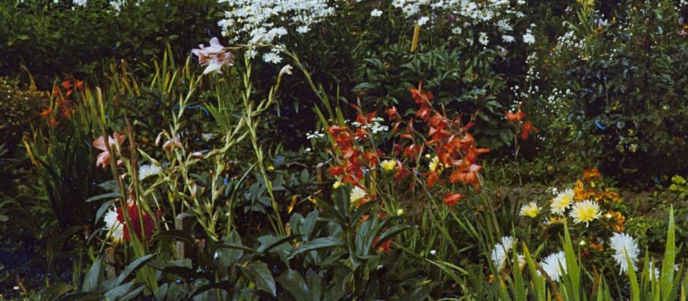Vanaema lilleaed 1983