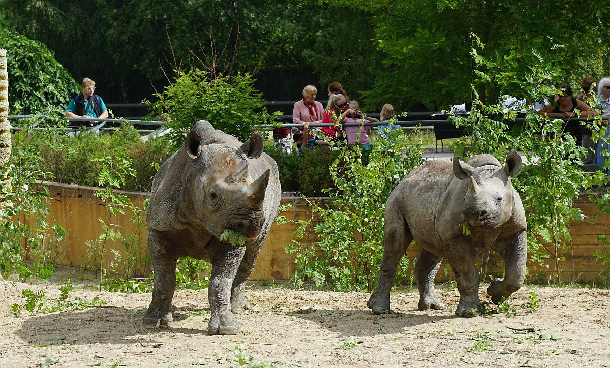 Tallinna loomaaed kutsub 25. augustil juubelipeole