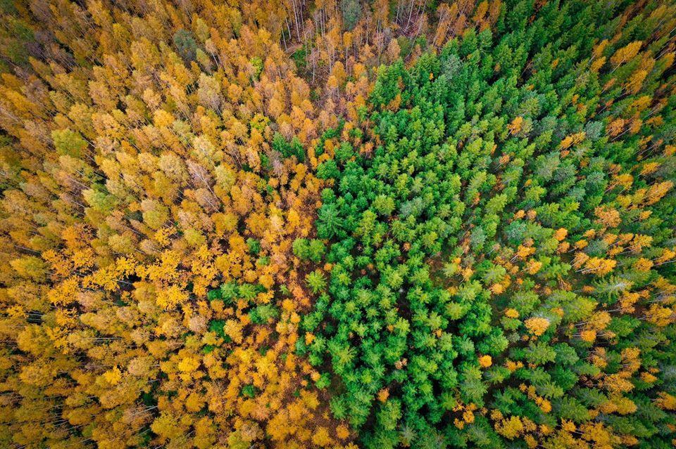 VIDEO I Marek Strandberg koroonaviiruse mõjust loodusele: me näeme juba praegu, kui kiire on looduse isepuhastumise võime