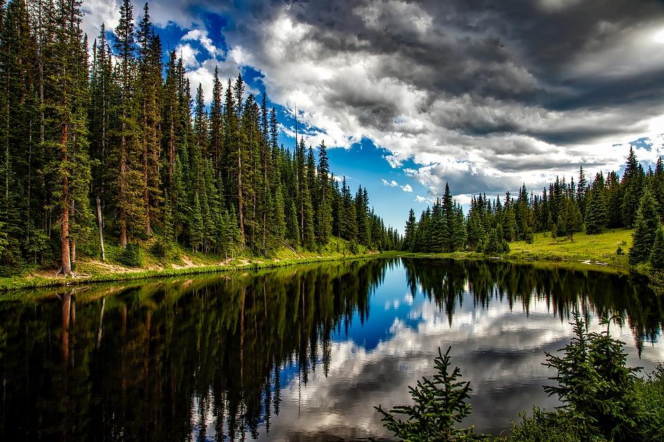 mets-loodus-puud-pixabay