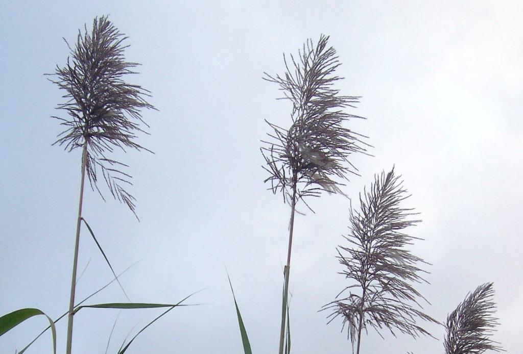 """TAIMED, KES MUUTSID MAAILMA I Tallinna Botaanikaaed kutsub aasta esimesele näitusele """"Taimed, kes muutsid maailma"""""""