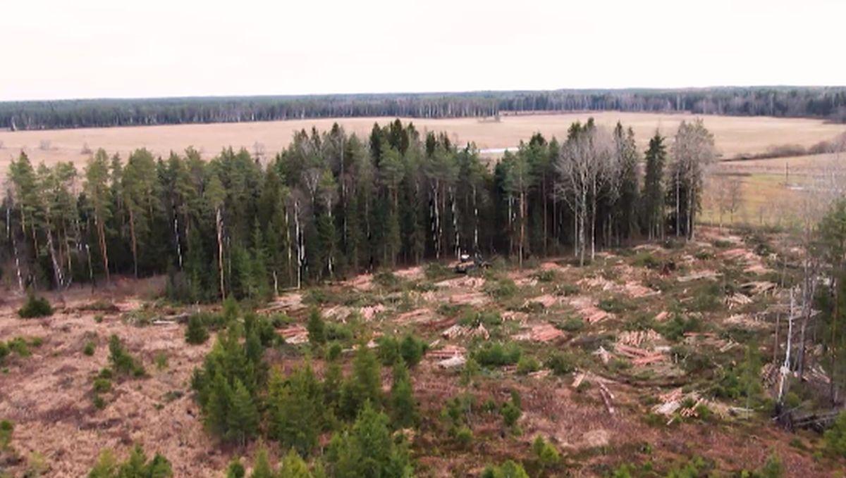 VIDEO I Uus metsanduse arengukava näeb ette Eesti muutumist kliimaneutraalseks riigiks aastaks 2050
