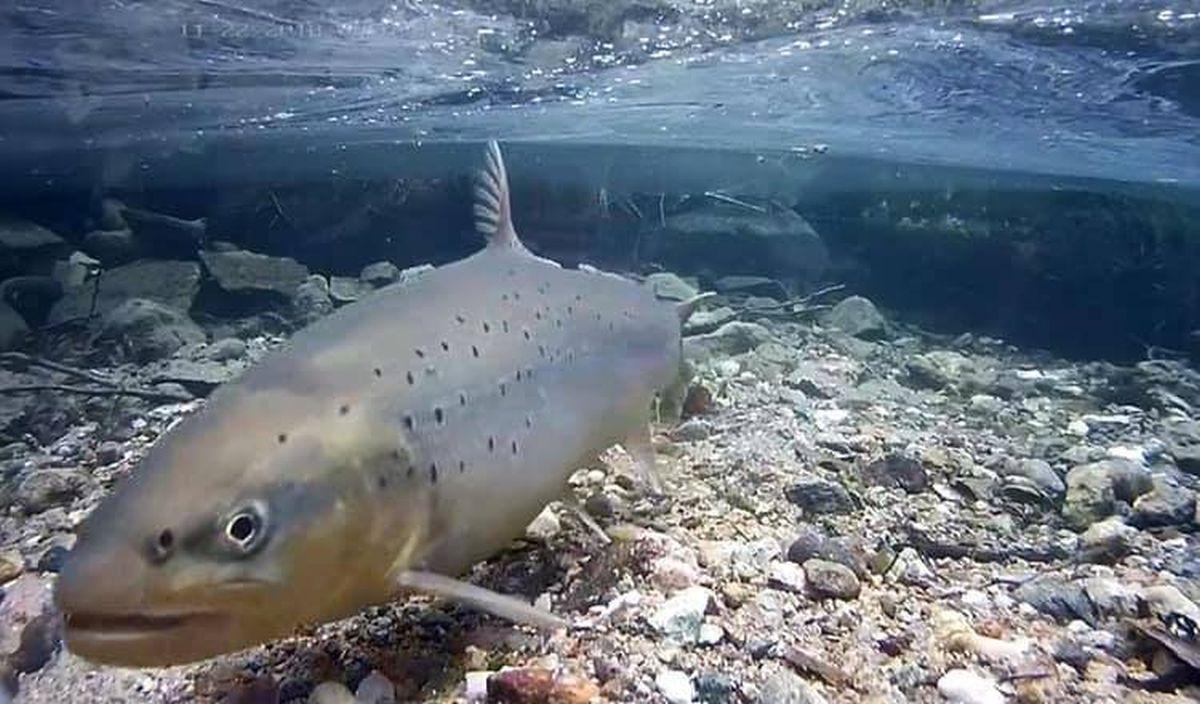 VIDEO I Kirglik kalamees Reigo Ahven: Läänemere kala on kõige puhtam kala, mida üldse süüa