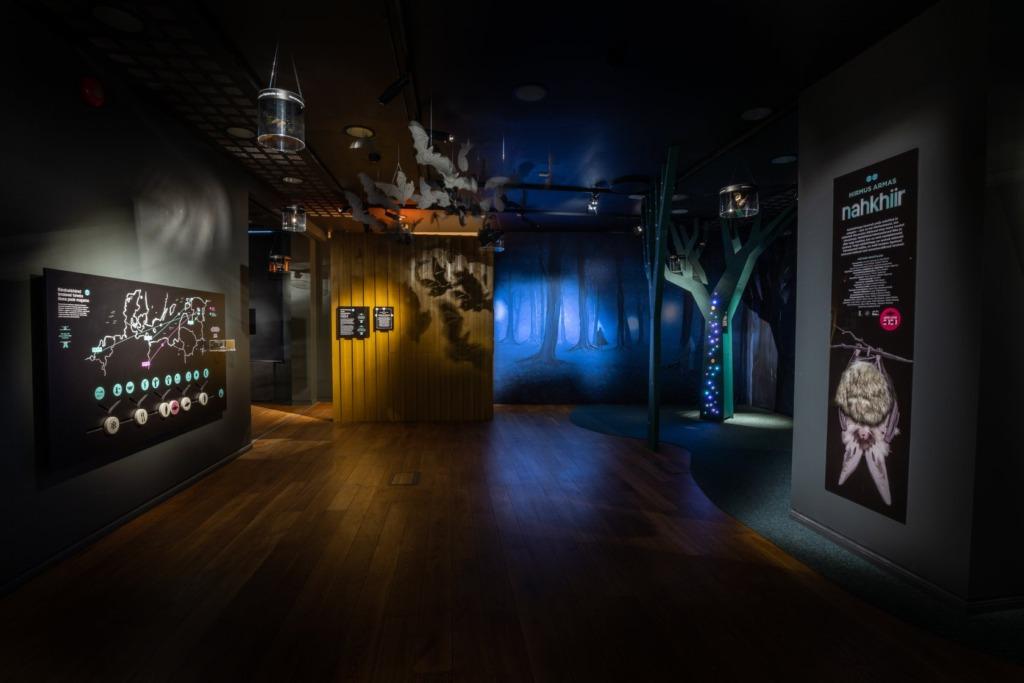 KÜLASTAMINE KÕIGILE TASUTA I Vaata virtuaalset Eesti Loodusmuuseumi