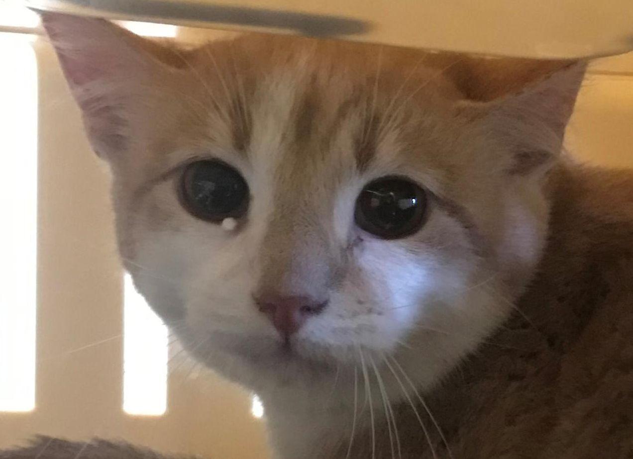 Varjupaigad saatsid sõbrakuul uude koju pea sada kassi