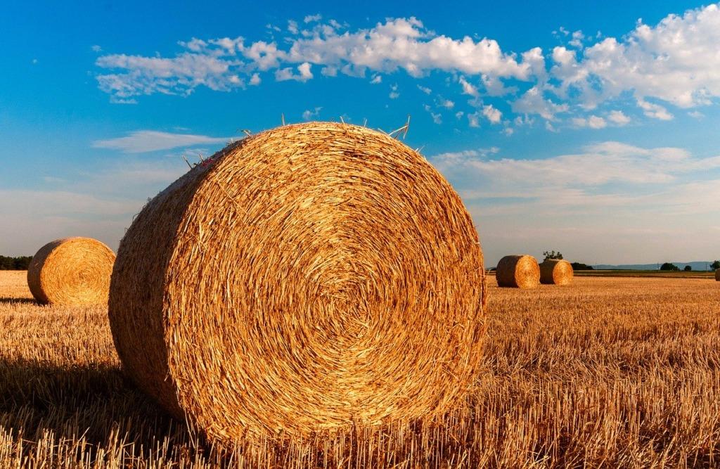 Põllumajandus