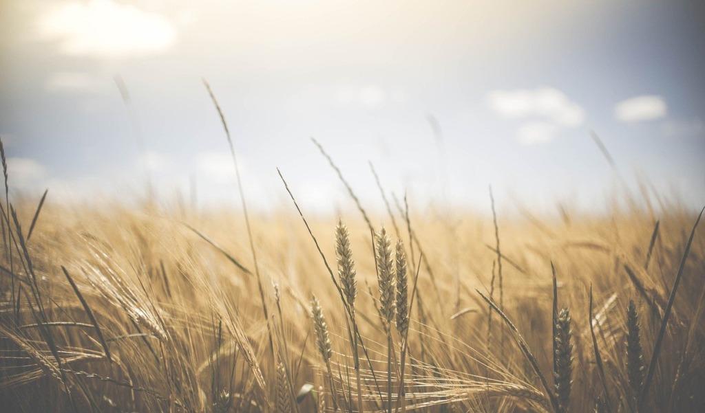 Põllumajandus- ja Toiduametile otsitakse juhti