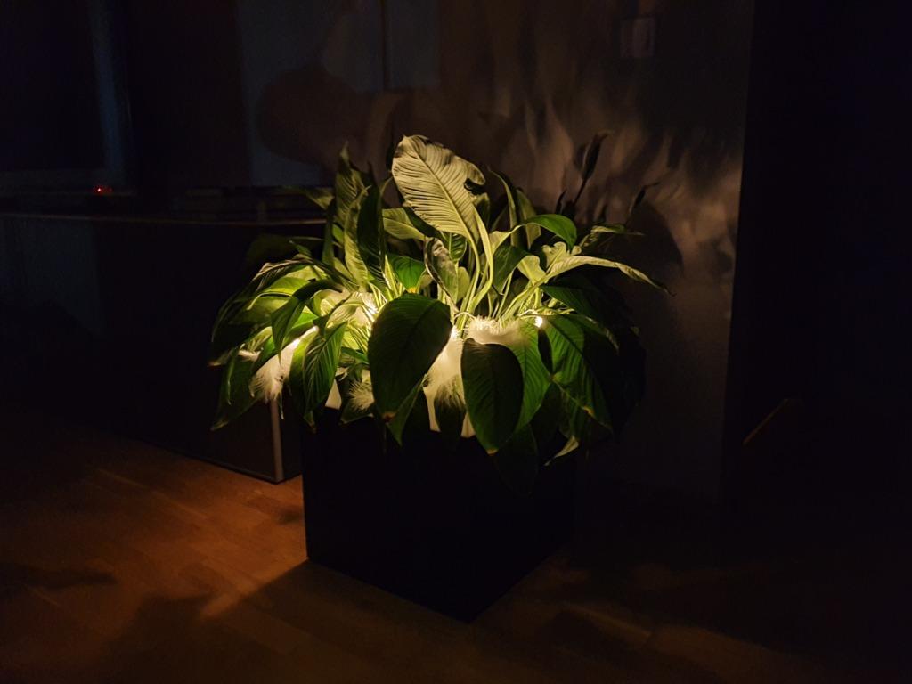 2020.03.29 Urmas Sarapuu SU Valgus õpetab – koduste taimevalgustite valmistamine (2)