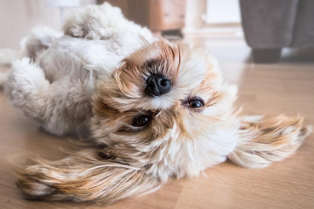 NÕUANDED I Kuidas karantiini ajal koeraga lõbusalt ja kasulikult aega veeta?