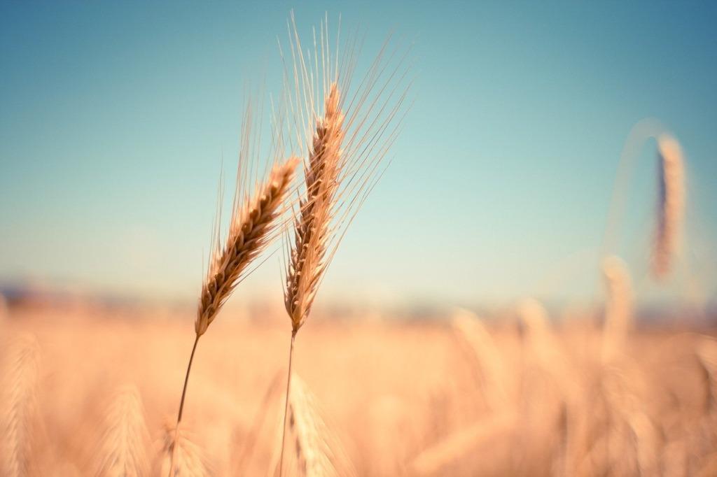 NOORED PÕLLUMAJANDUSSE I Põllumajanduskoda kutsub noori õppima maamajanduserialasid