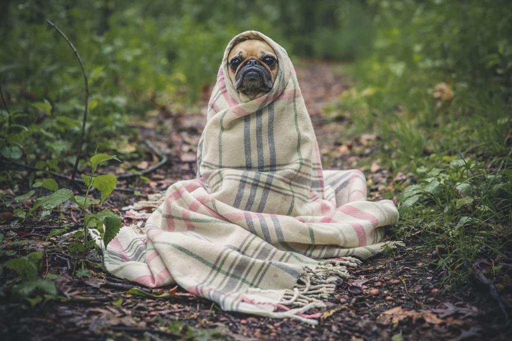 Koer.Tekiga.Pixabay