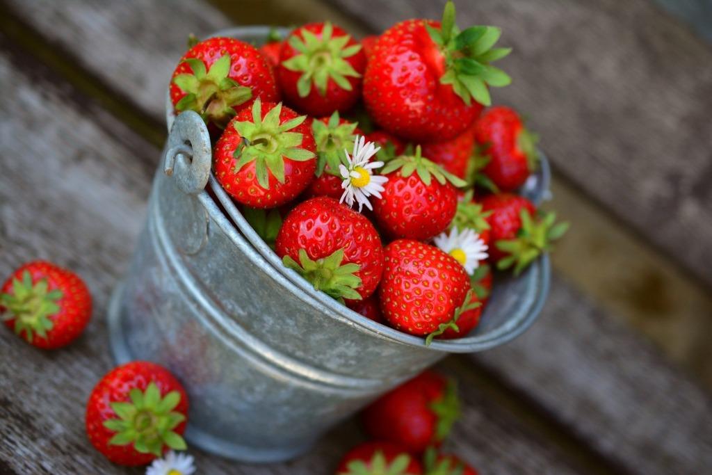 VIDEO I Kuidas on valitsev suvekuumus aidanud kaasa kodumaiste maasikate küpsemisele?