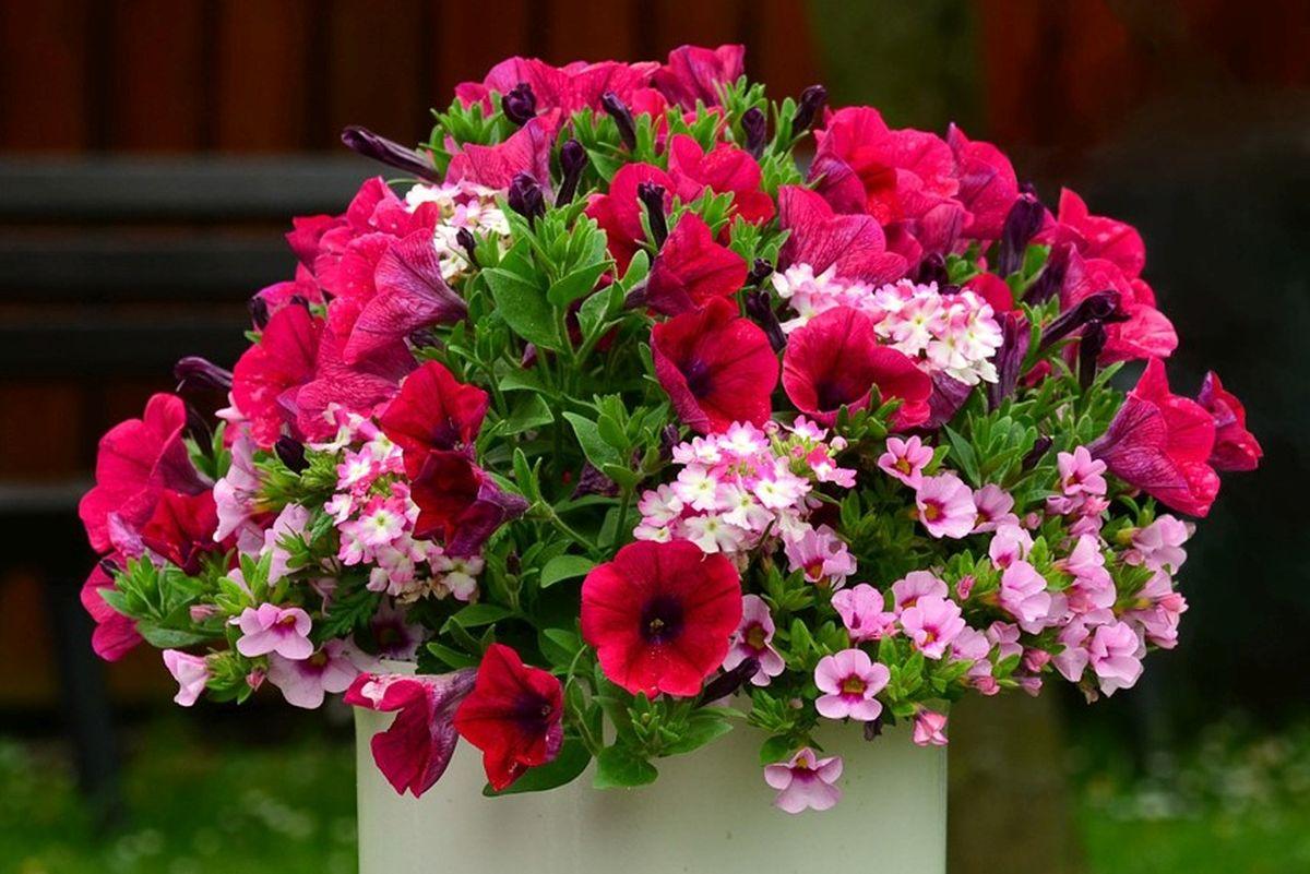 lilled_vaasi
