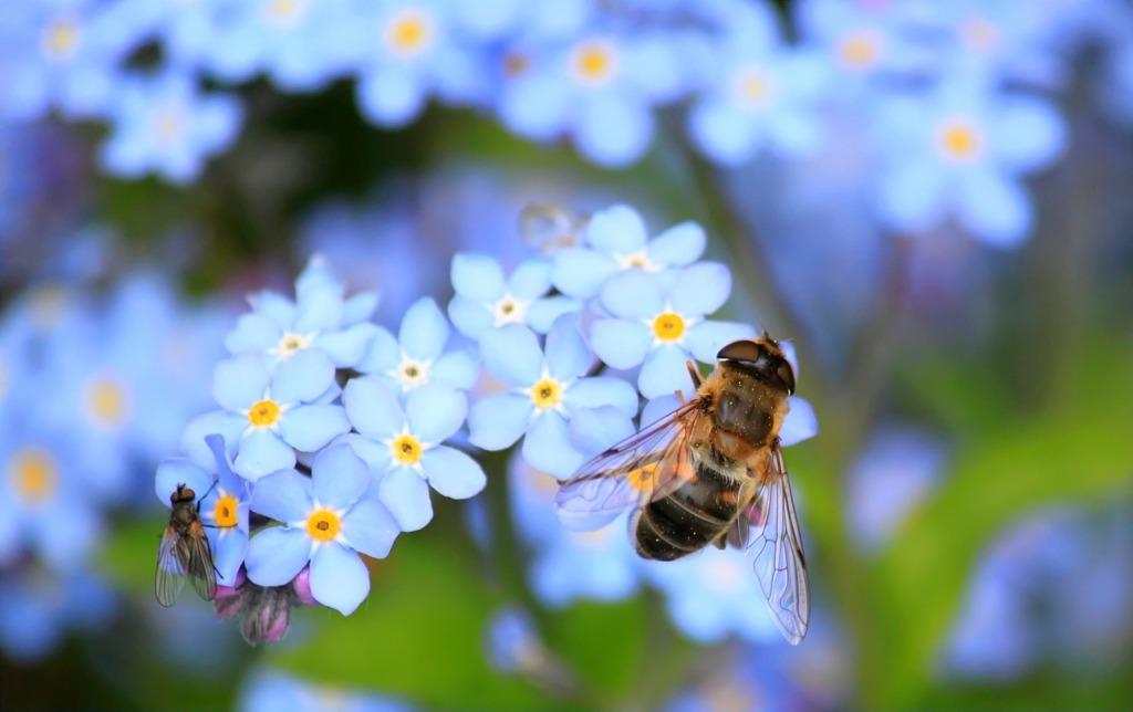 KOOS ON KERGEM I Taimekasvatajate ja mesinike ühised pingutused on vilja kandnud