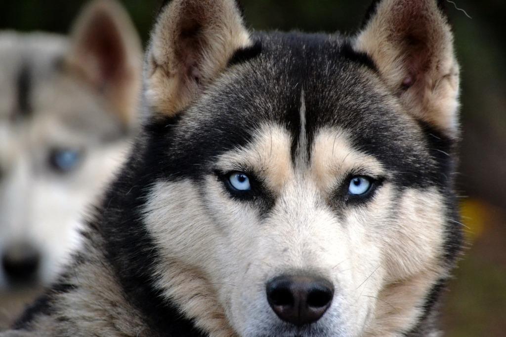 Loomade varjupaigad pööravad novembris eritähelepanu vanematele koertele