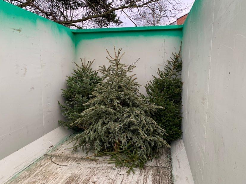 Pirita kogub vanad jõulupuud pärast pühi kokku