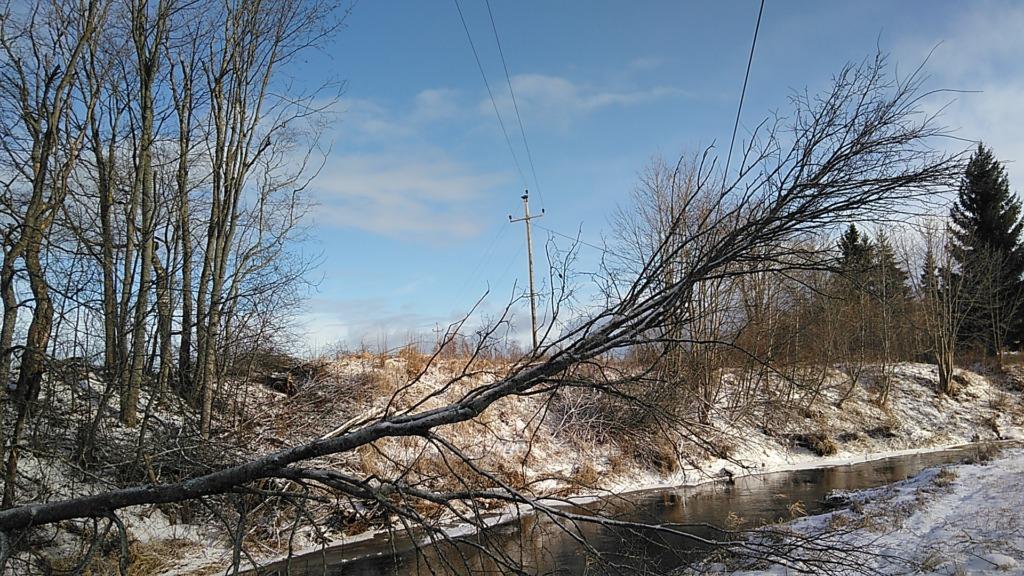 Tormituuled on langetanud puu liinidele