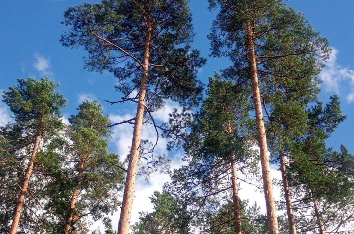 Metsanduse arengukava uus juhtkogu alustas tööd