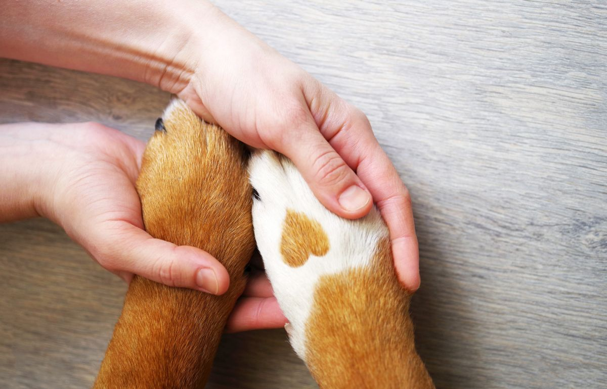 Dog,Paws,With,A,Spot,In,The,Form,Of,Heart