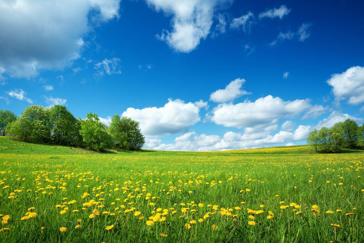 Euroopa Komisjon: bioenergial on oluline roll säästlikus energiamajanduses