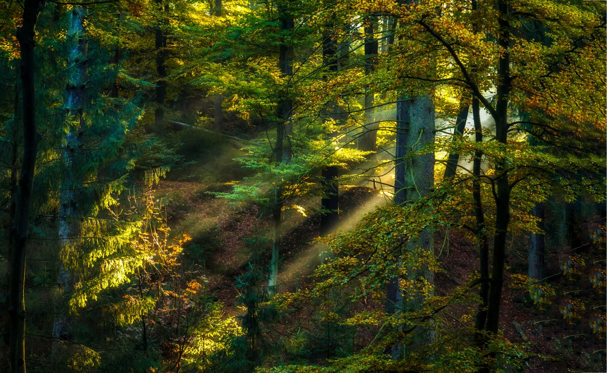 Magic,Forest,Sunlight,Rays,Background.,Woods,Hiking,Forrest
